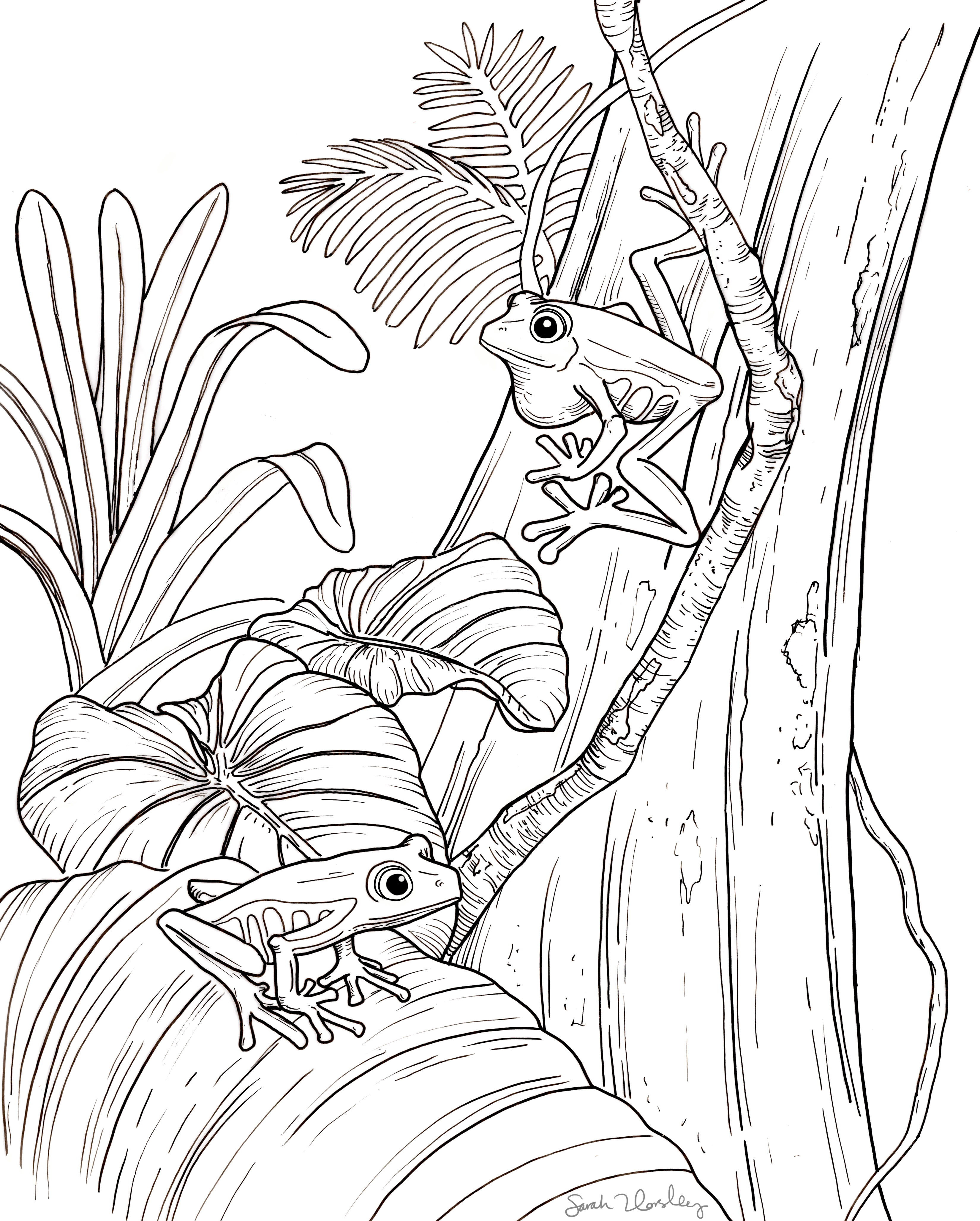Amphibian Coloring Book Pages Sarah Horsley