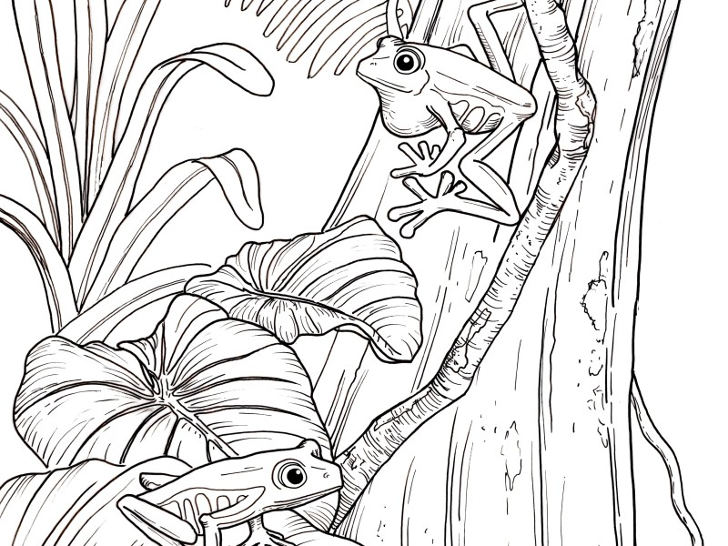 amphibian coloring book pages